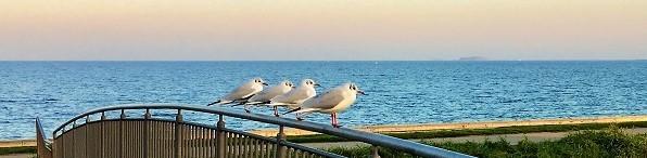 Ocean and seagull on a bridge